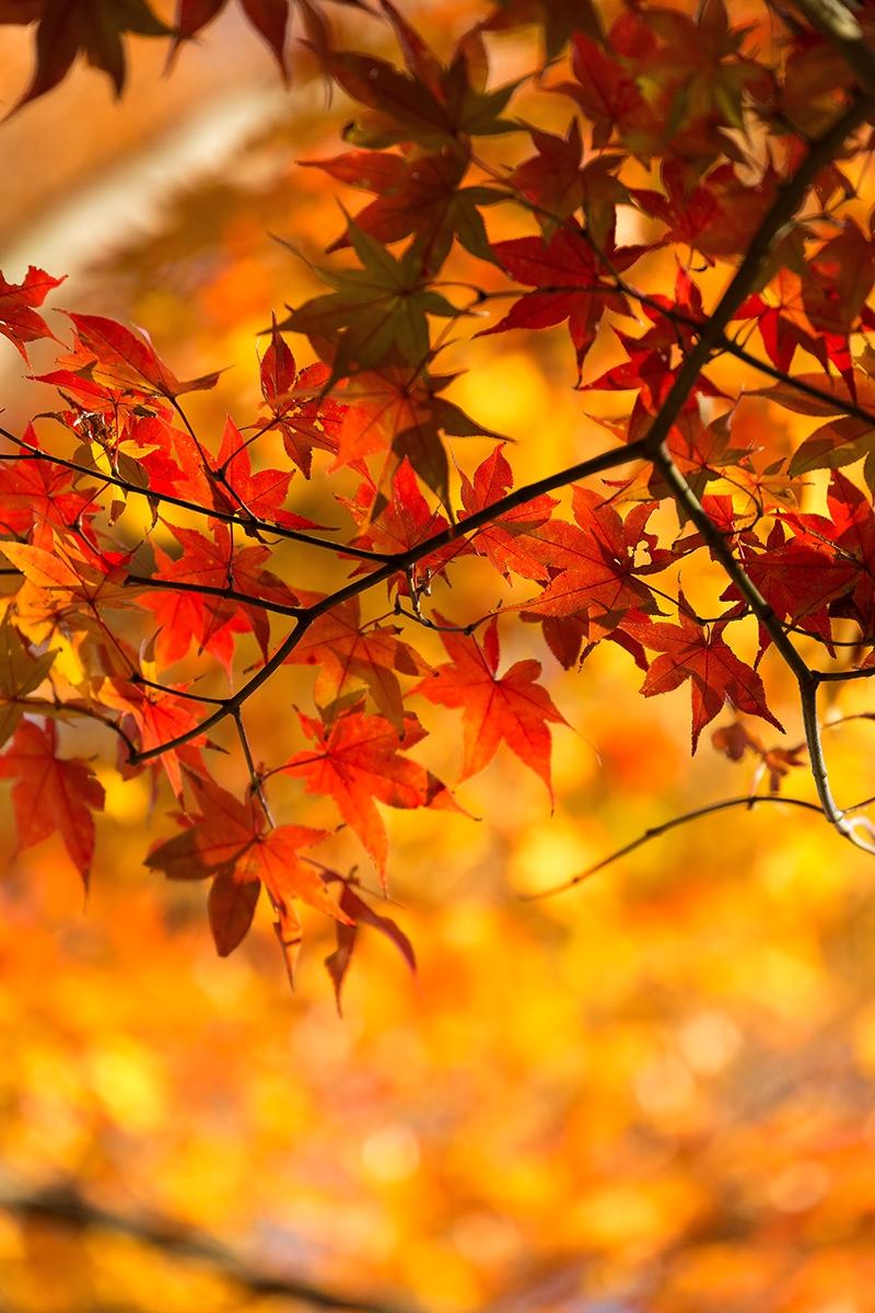 紅葉を見に行こう。京都でライトアップしているおすすめの場所は?