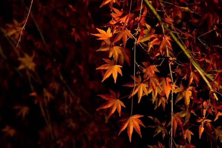紅葉を見に京都へ、ライトアップされていて、車で行けるところは?
