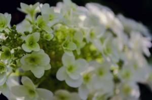母の日のお花はカーネーション以外では何がいい?花言葉は?