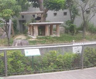王子動物園の夏休みの混雑状況は?トワイライトzoo?パンダの返還?